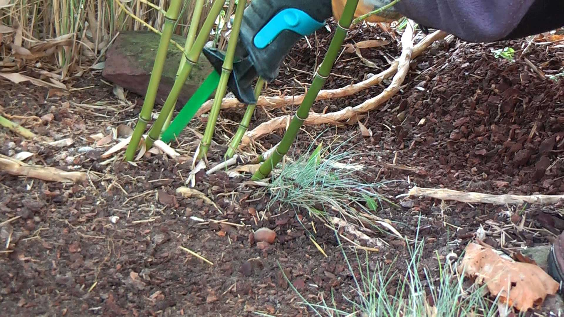 Bambus Rhizome entfernen